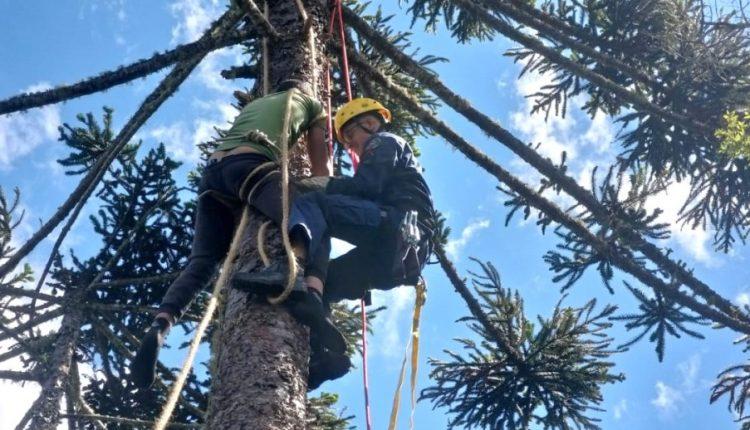 cotidiano-jovem-e-resgatado-apos-ficar-cerca-de-2-horas-pendurado-em-pinheiro-1